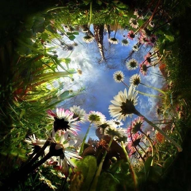 Точка зрения из травы